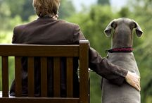 SOCIETY DOG LOVERS / Dogs are not our whole lives, but they make our lives whole!