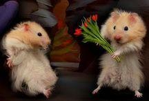 Valentines Day / by Victoria Davis