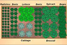 Gardening Planning