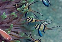 wonderful fishes
