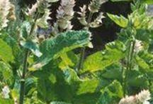 fűszer,zöldség,virág