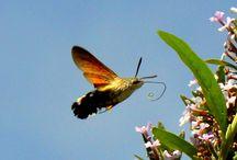Tiere / Schmetterlinge, Käfer und mehr