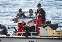 Go Fishing! / Fishing Guides, Resorts & Lodges in British Columbia