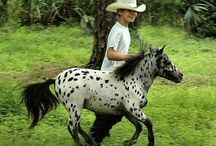 """Horses / """"There is something about the outside of a horse that is good for the inside of man.""""   So true"""