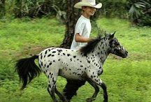 Miniatyrer horse