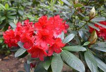 Redding Flowers