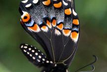 Butterflies / by Sheri Rollins