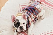 Luka baby dog