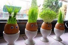 Horta casca de ovo