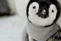 Cuteness♥