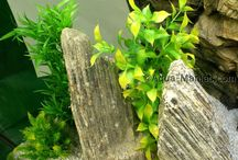 Aquarium Decoration Ideas / How to mix natural decoration with fake plants and natural rocks plus 3D background