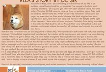 Riza - Adopted! / Female - 9 Years Old - Red