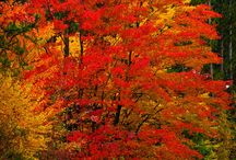 Love Fall Colors / by Mary Ann Johnson