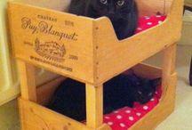 Katzen und Katzenmöbel