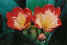 Natuur! / Mooie bloemen, planten,enz. Zie je ook hier!