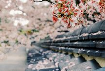 私の夢。。。日本