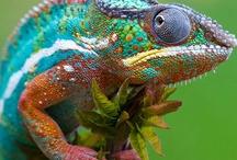It's Alive / Living creatures and pets / by Kris Fiori-Antijunti
