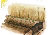 Zöldségek a kertben