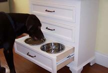 Pet Furnature / Cool Furniture and gadgets for pets