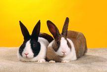 Tapety - zwierzęta - króliki i zające