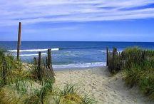 beach / by Yvonne Fitzell