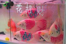 ✧ fishy ✧ / fishfish