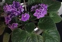 Kvety byt