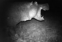 Camera Traps / by Earthwatch Institute