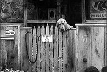 Dogs Monochrome(Black & White) / Best Black & White Photos of Dogs are available.