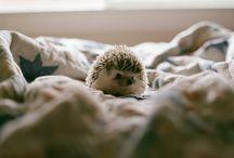 Animals:) / by Meredith MacDonald