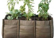 JARDINS / Plantas, objetos e decoração de Varandas e Jardins