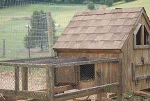 Livestock / I dream of a small farm.