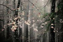 Lovely photos