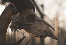 Skulls & Skeletons / by Courtnye Koivisto