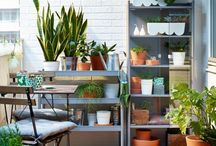 My garden! / All you need to have in a small garden to a huge one...planters..flowers...equipments and more....