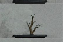 Bonsai development
