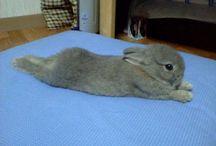Rabbits and Other Animals / by Beth Verwey (Jorgensen)
