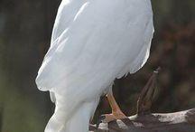 Fav Birds