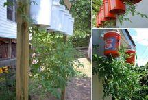 plantar tomate na pet.