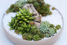 Terrariums and Succulent Heaven! / For the love of succulents! This board is for all things terrarium and wonderful!