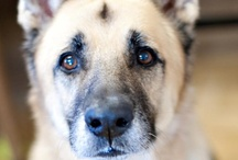 Pets for adoption at the SPCA of Westchester