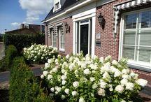 Portfolio Tuinontwerp met veranda en pergola Heemskerk 13 / Deze tuinen is ontworpen door Buitenwens; Cecilia Goossens-Niesten. Dat geldt ook voor de beplaning. De tuinaanleg is gedaan door hoveniers onder leiding van Buitenwens.