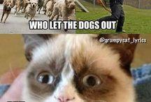 Houmor of pets