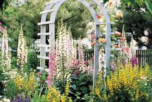 Dream garden / by Irene K