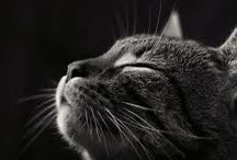 cats. these awesome pets :) / i love them all. really. but the mangy ones.