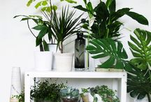 Decorating with greenery •••