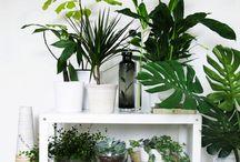 • Plantas / #plants #garden #green #flor  #plant #plantas