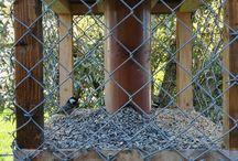 Fuglemater