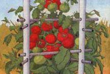 para los tomates
