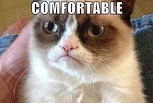 Grumpy cat / Yep I'm a lover of grumpy cat and yes grumpy cat is my life hahahah